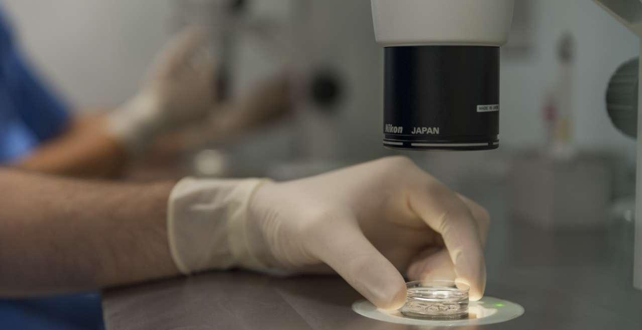 Fecondazione in vitro