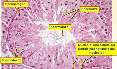 Biopsia Testicolare a Salerno